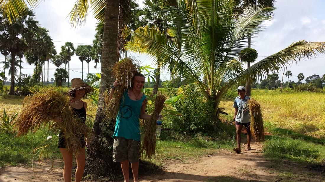 Cambodia Rice Farmer - At Work
