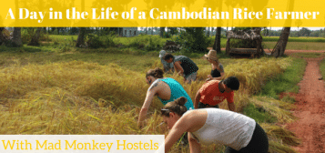 A Day in the Life of a Cambodian Rice Farmer