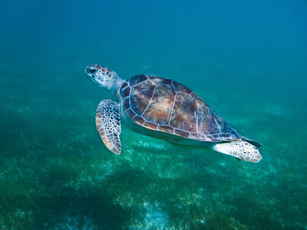 Snorkeling in Bocas del Toro