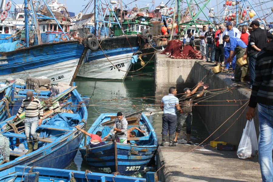 Landscapes in Morocco Essaouira Fishing