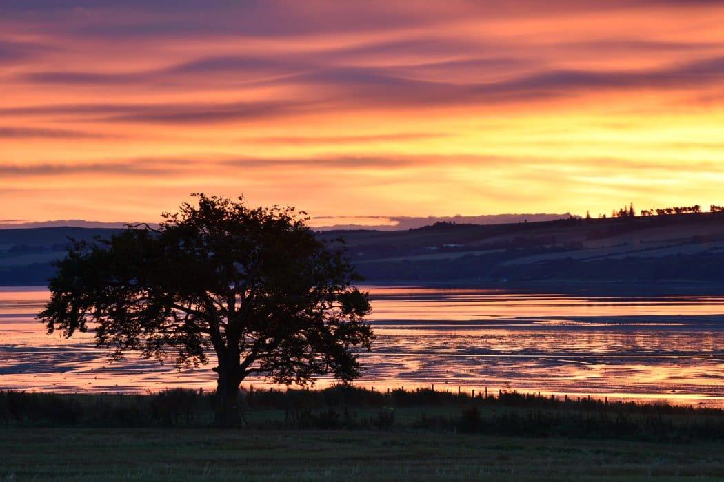 Beech Tree at Dawn, Udale Bay, Black Isle - Karen Thorburn (1)