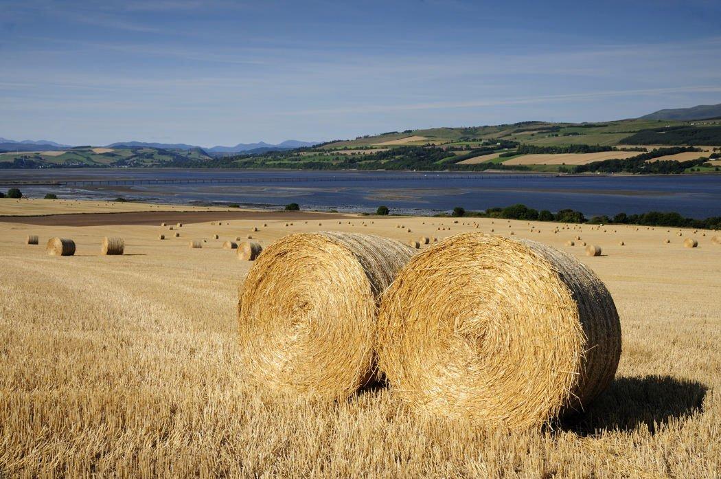 Harvest, Findon, Black Isle - Karen Thorburn