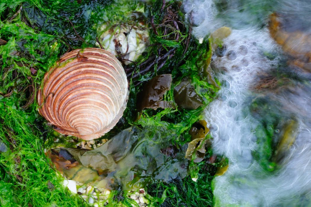 Spring Tide and Clam, Loch Dunvegan, Isle of Skye - Karen Thorburn