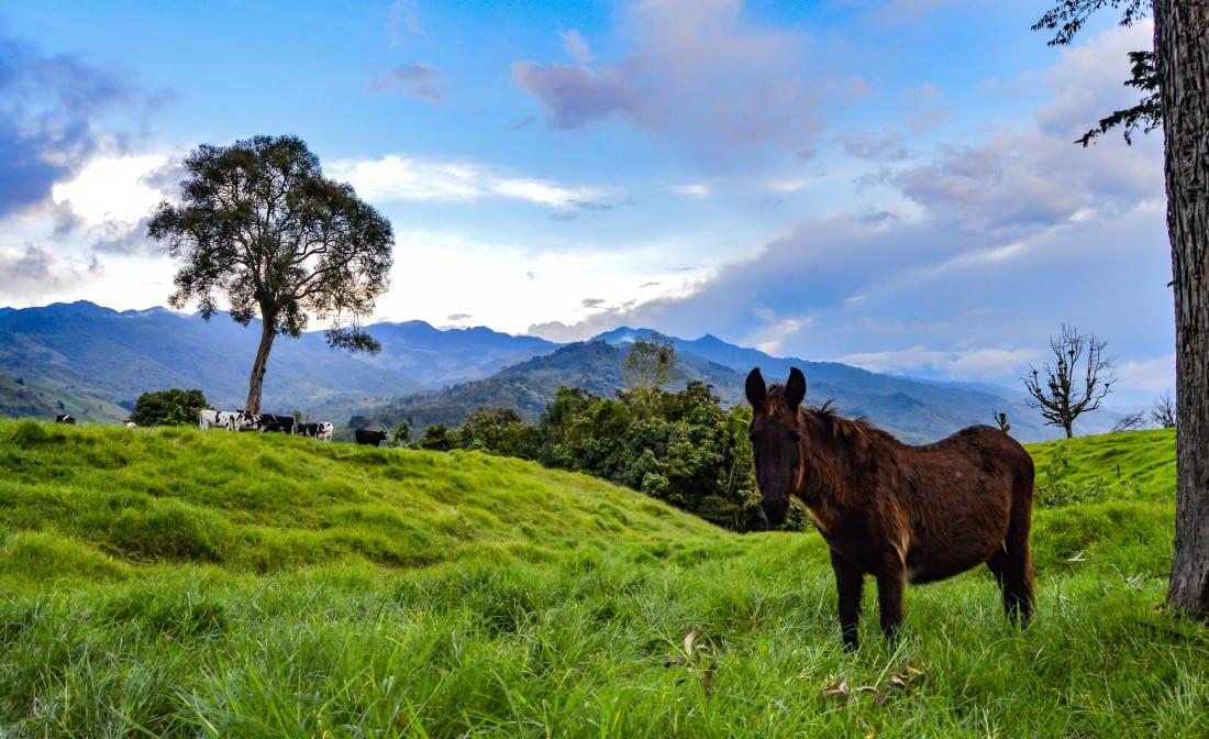 horse in salento colombia
