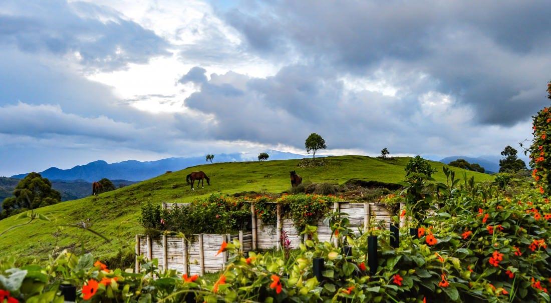 horses in salento colombia