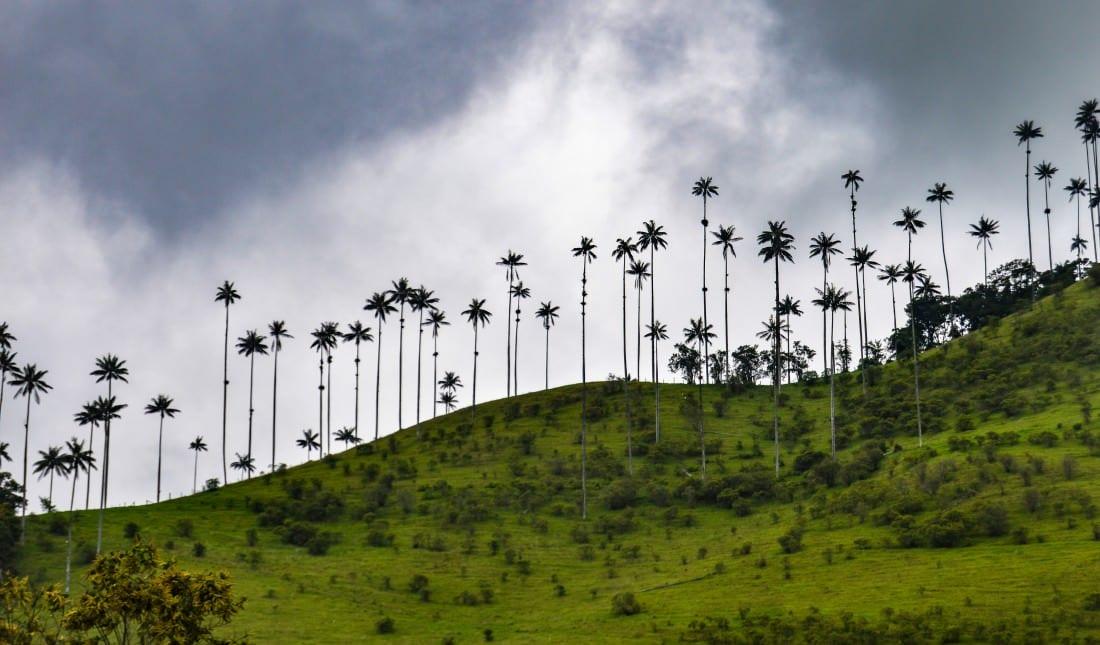 Cocora valley in Salento
