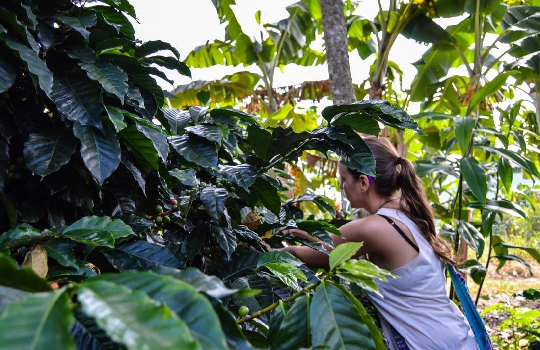 coffee plantation tour salento colombia
