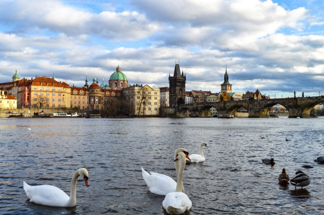 Swans and the Charles Bridge in Prague