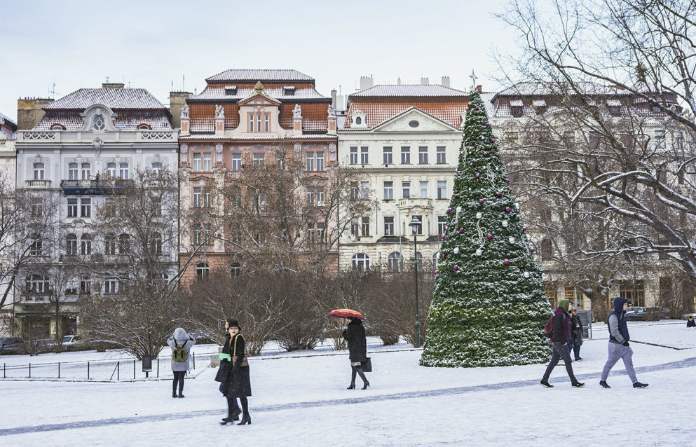 snow and christmas tree in namesti miru, prague
