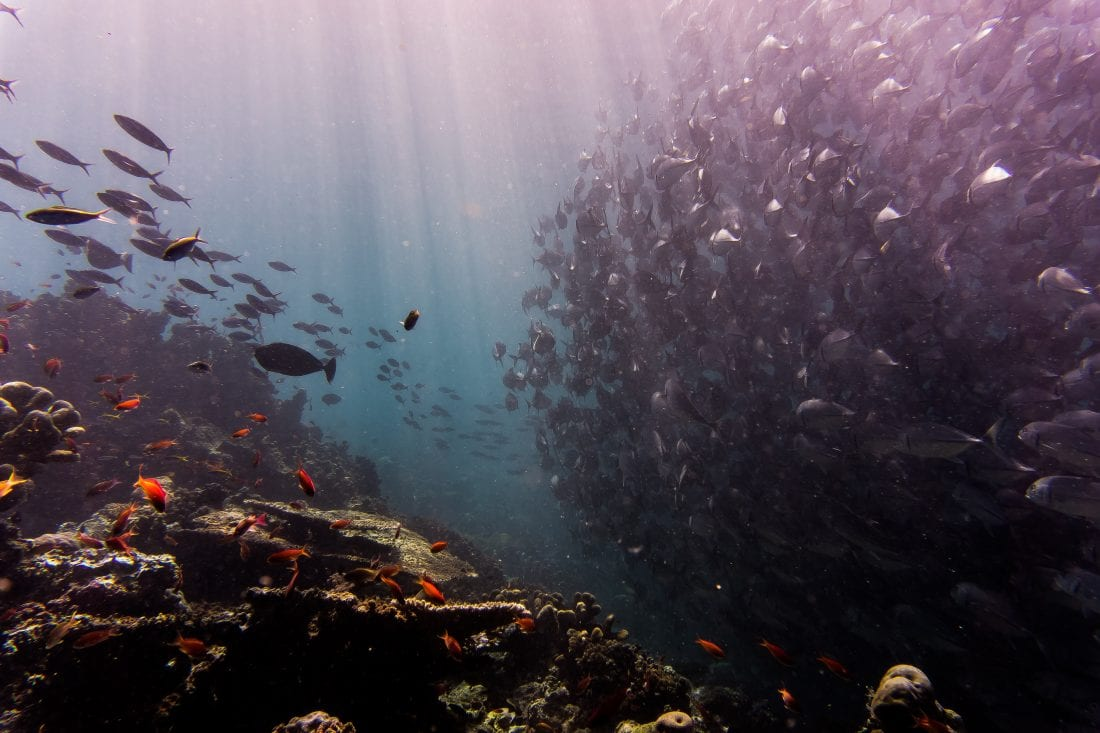 scuba diving health benefits