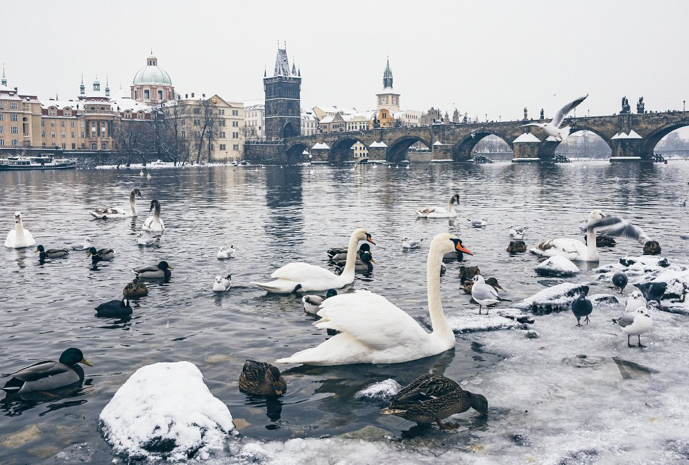 swanson the river in Prague with Charles Bridge