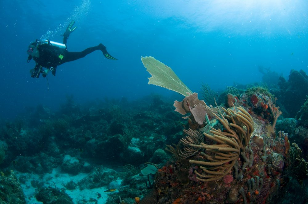 reasons to try scuba diving