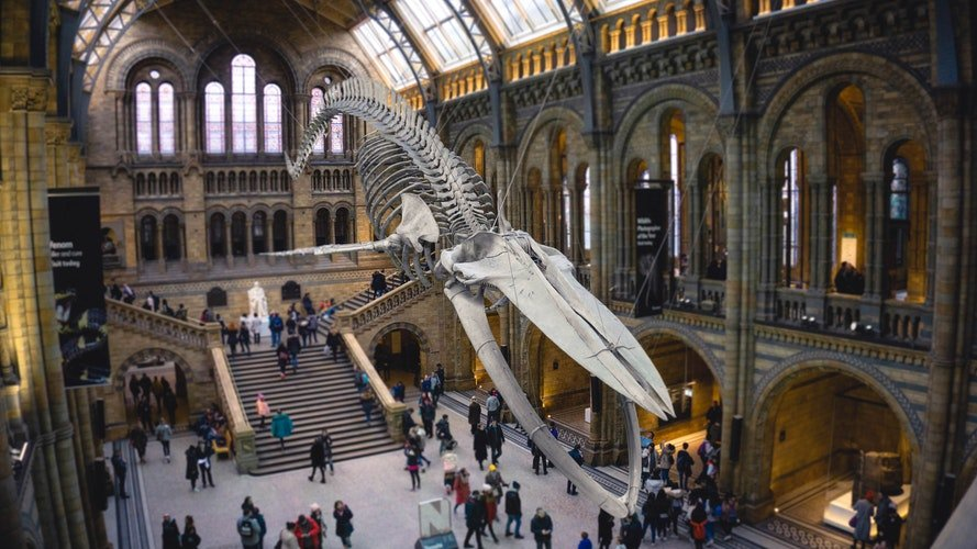 cheap or free things to do in London - visit the museums