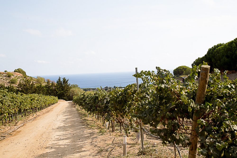 Best Vineyards near Barcelona
