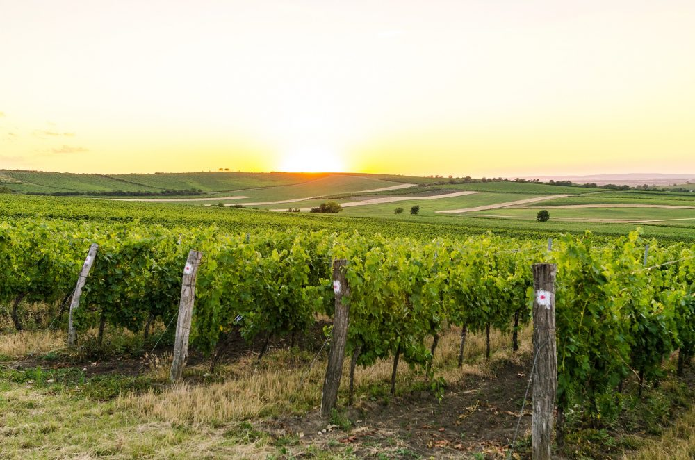 Vineyards of South Moravia