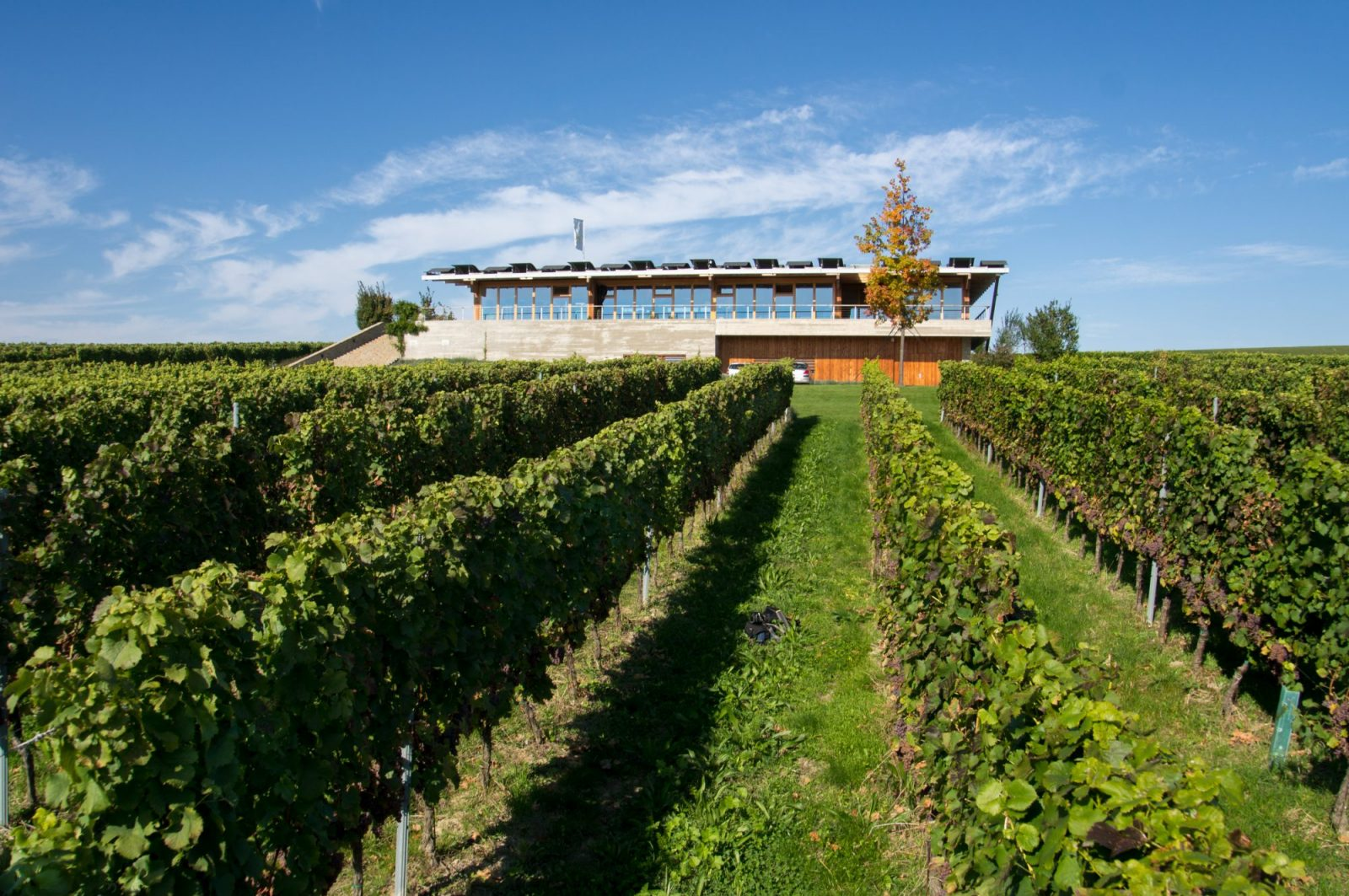 Sonberk Vineyards and Winery in South Moravia