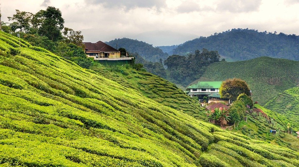 things to do in Malaysia - Cameron Highlands