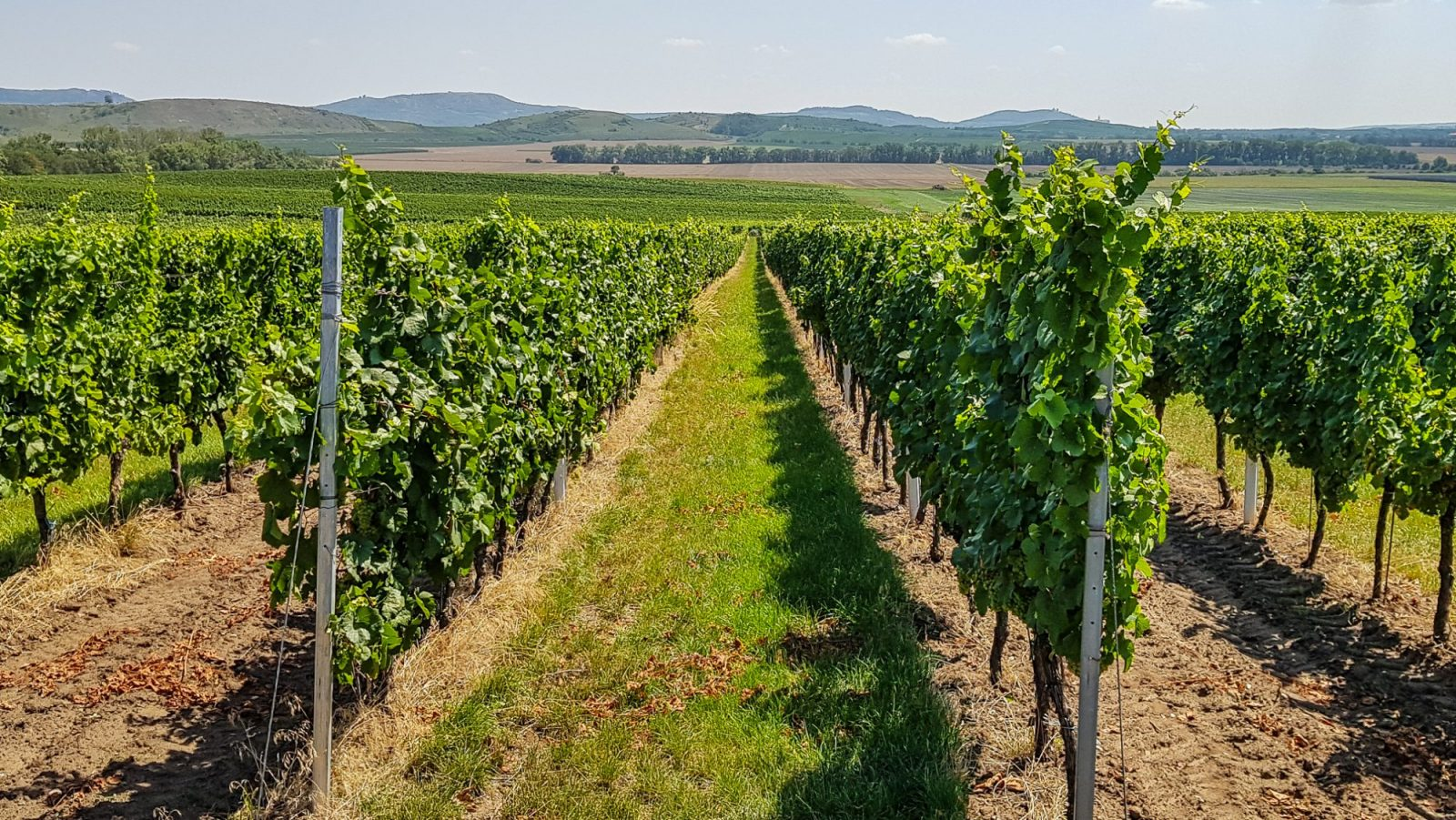 Czech Wine Tours in South Moravia