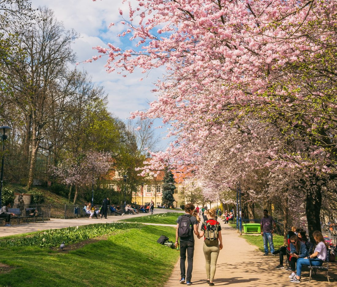 how to spend a weekend in prague - petrin park in spring