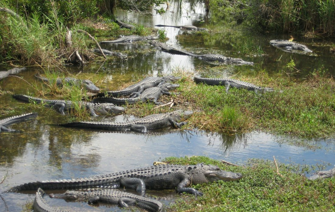 Everglades National Park near Miami
