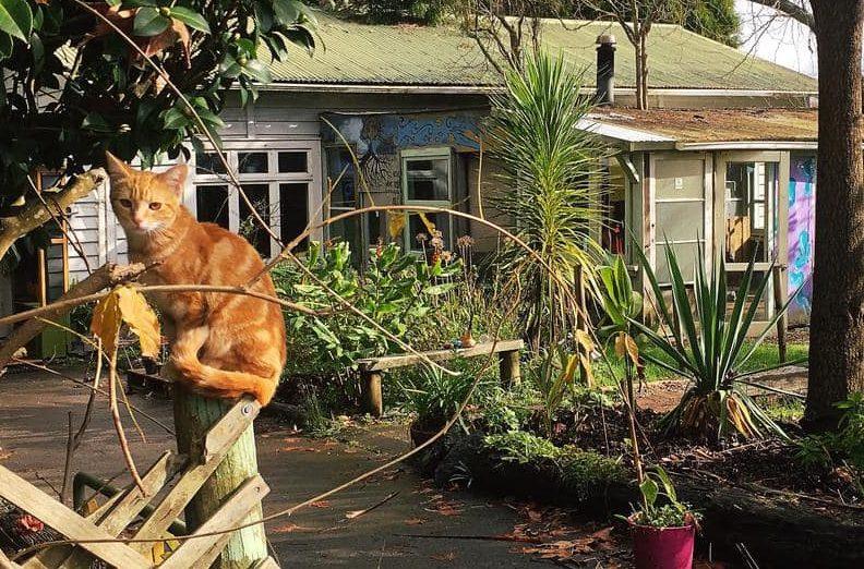 fat cat travellers best hostels auckland