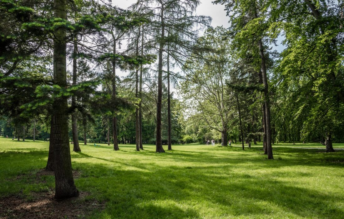 stromovka park field prague