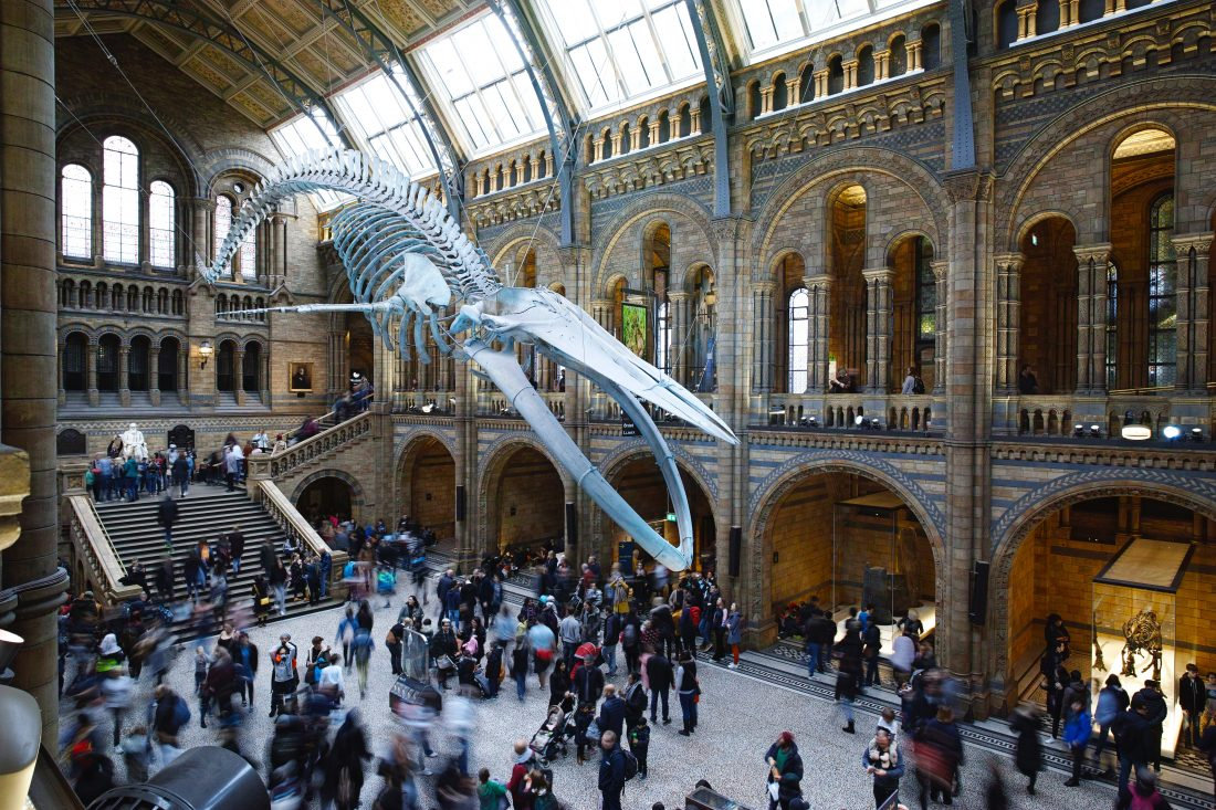natural history museum yc