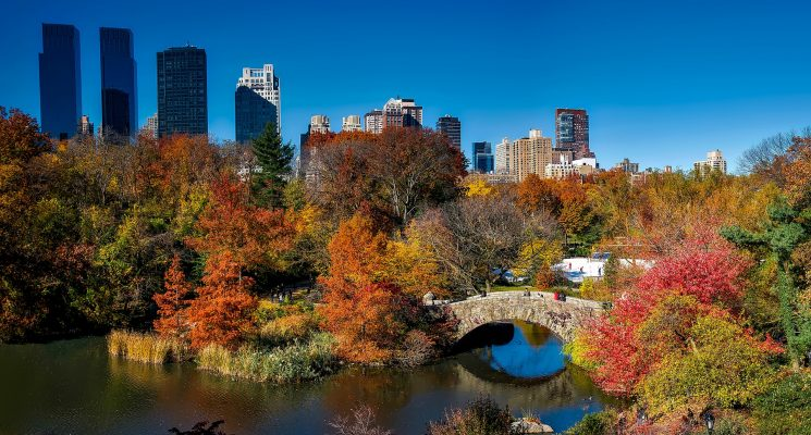 autumn foliage in New York's Central Park