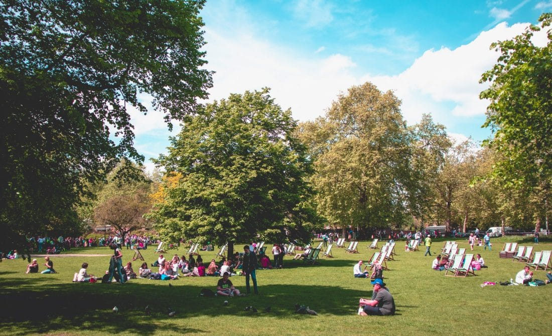 a sunny picnic scene on grassy field in Prospect Park NYC