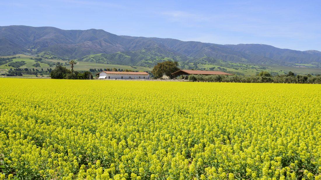 crops growing in Salinas Valley
