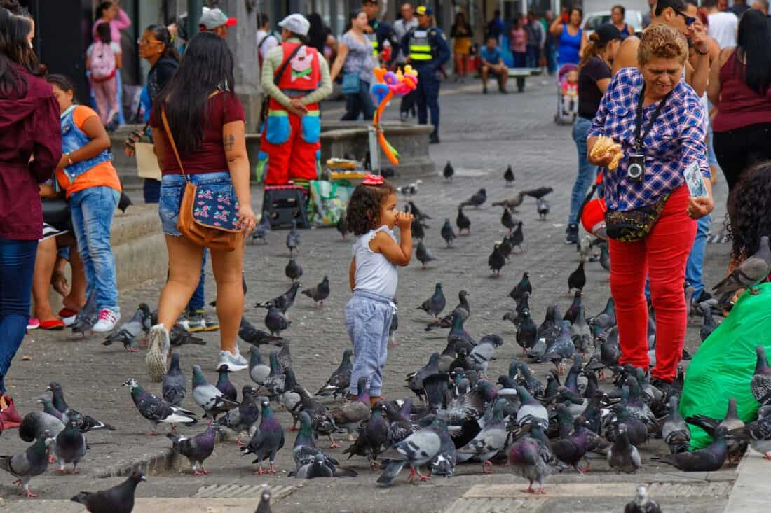 picture of pigeons in a square in costa rica with people walking by