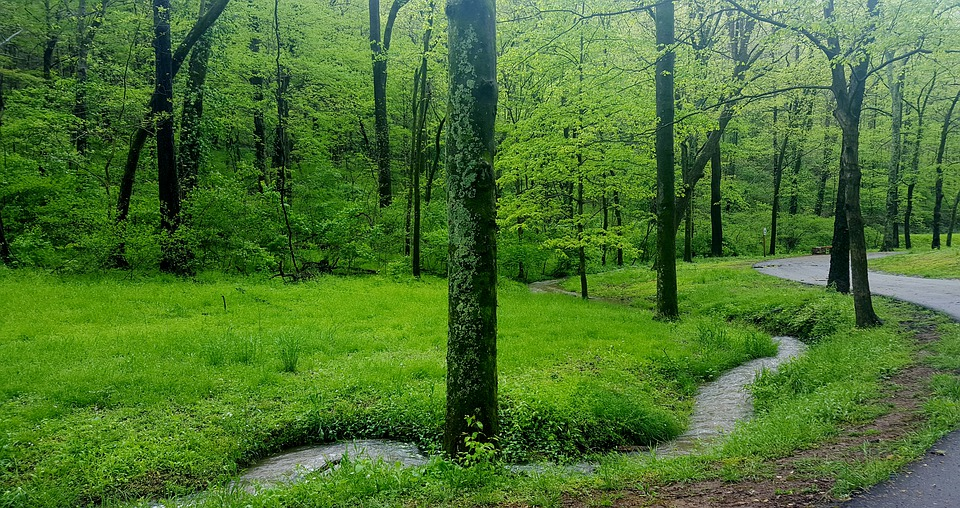 green grass and trees on a hiking trail in Nashville