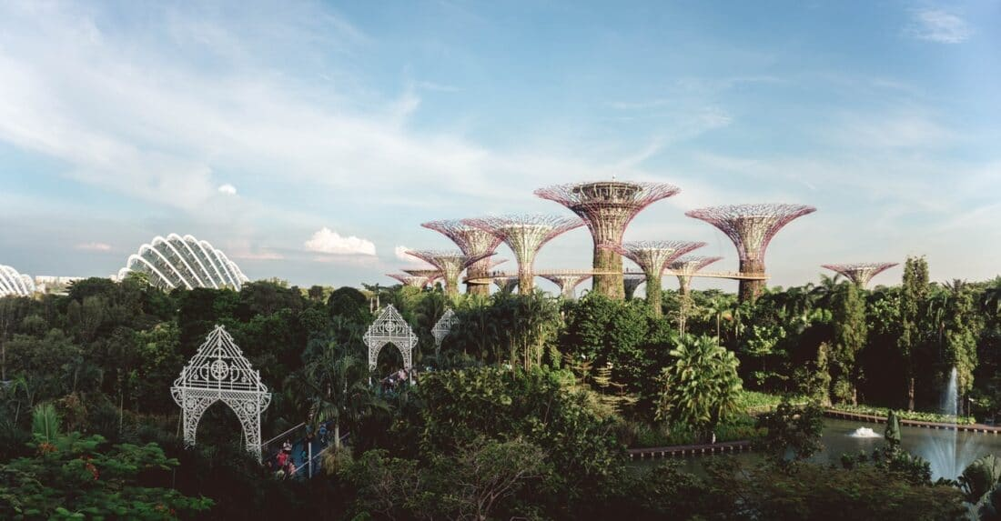 trees and the super tree buildings in Singapore