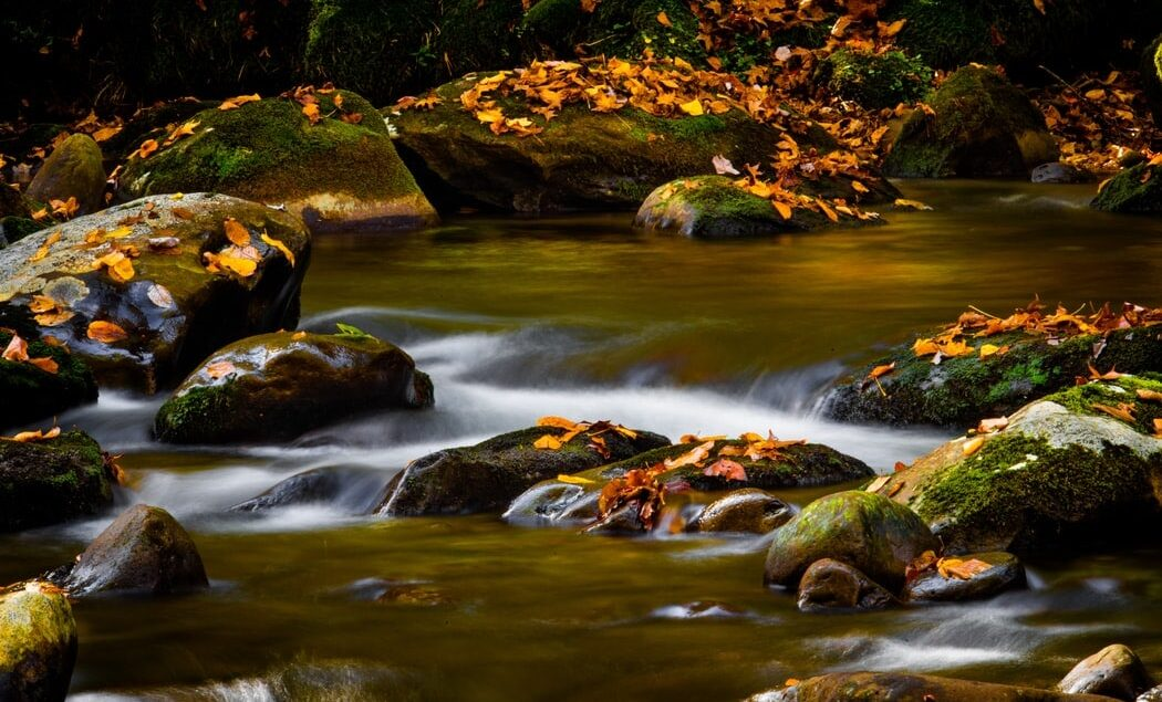 a stream with fall colored leaves